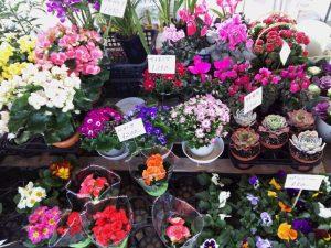 flower1.15-2